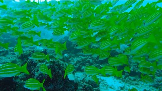Raa-atollen: Dive Club Furaveri