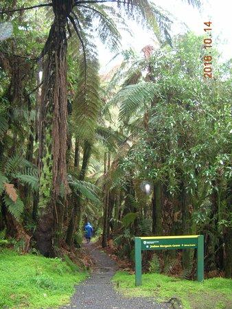Stratford, Selandia Baru: Bush entrance to Morgan's Grave walk