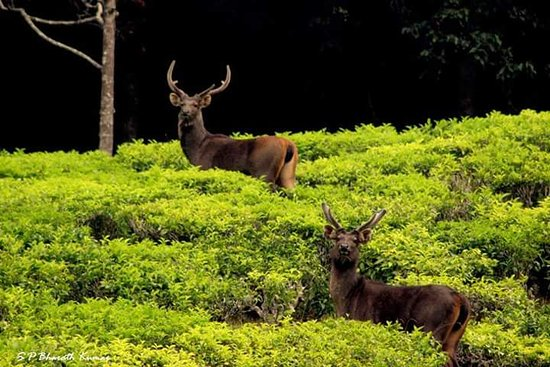 Ooty Heritage tours and Travels