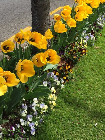 Invercargill, Nueva Zelanda: Spring flowers
