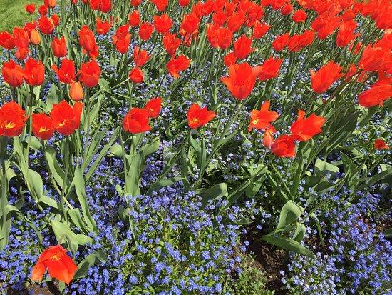 Invercargill, Nouvelle-Zélande : Spring flowers