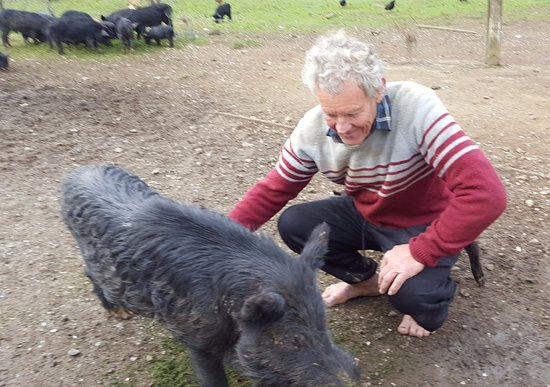 Coromandel Peninsula, Selandia Baru: Stu pets one of his many wild pigs while a handful more in the background busy themselves with f