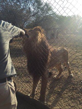 Hoedspruit, Zuid-Afrika: photo2.jpg