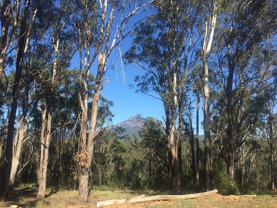 Rathdowney, Australia: View of Mt Maroon from The Shed Cafe.
