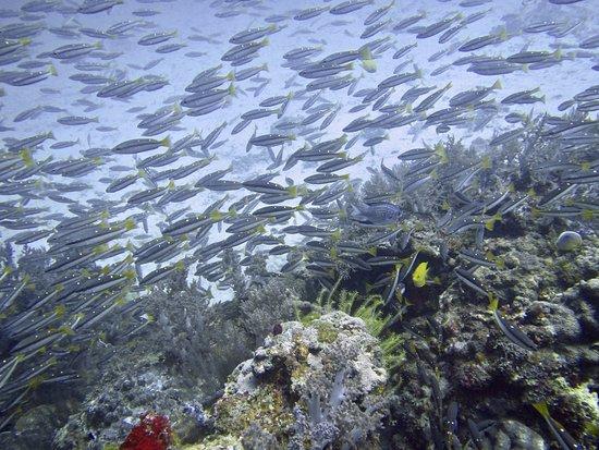 Rawai, Tailandia: Unterwasserwelt Thailand