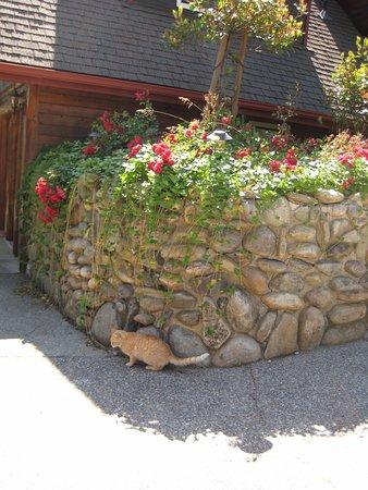 Nature's Inn Bed & Breakfast: B&Bに住みついていた猫が、我々が帰ってくると、部屋に飛び込んできて、ベッドを占拠しました。