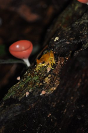 Sierpe, Costa Rica: Frosch vor einem Pilz