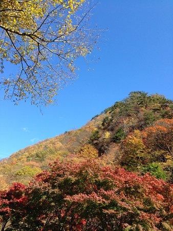 Bilde fra Midori