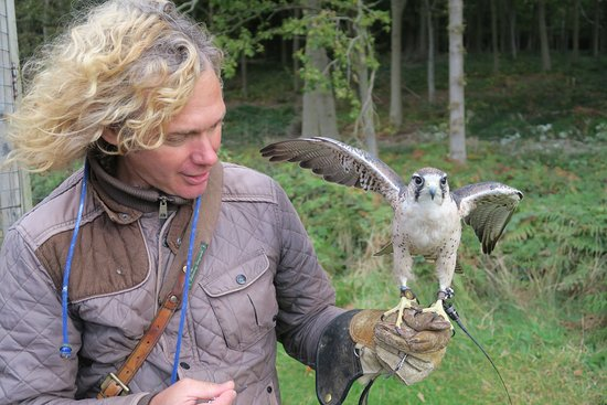 Herstmonceux, UK: Gerald & one of his falcons