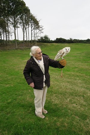 Herstmonceux, UK: Flying a Barn owl