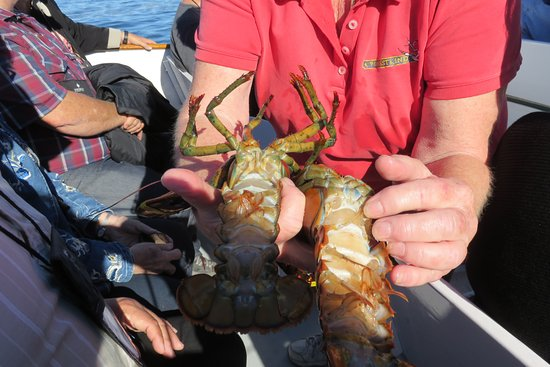 Finestkind Scenic Cruises: presentation des homards pêchés
