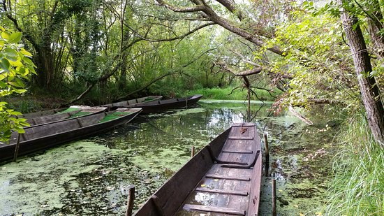 Bootsfahrten im Taubergießen