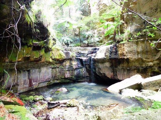 Rolleston, أستراليا: Moss and Fern Garden