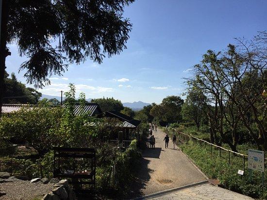 Tenri, اليابان: photo1.jpg