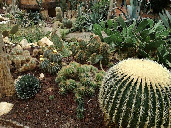 pairi daiza superbe jardin sec - Jardin Sec