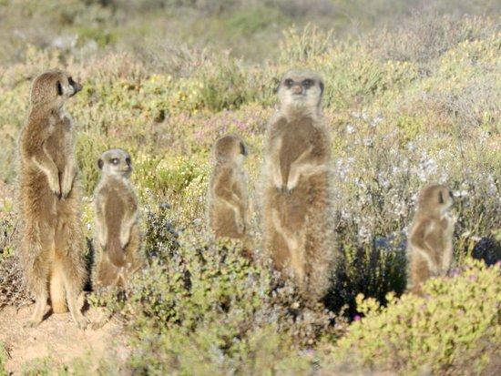 Meerkat Adventures: photo2.jpg