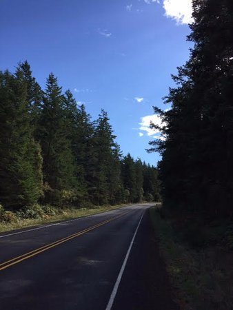 Friday Harbor, WA: Tree lined roads and courteous drivers. San Juan Islands are bicycle heaven.