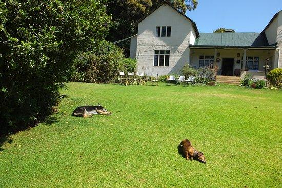 Limuru, Kenia: Two dogs