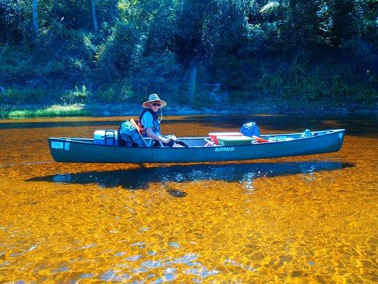 Live Oak, FL: Suwannee River during low water.