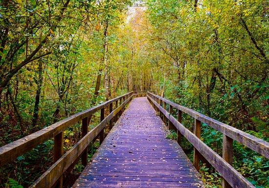 Lower Saxony, Germany: Boardwalk through the woods.