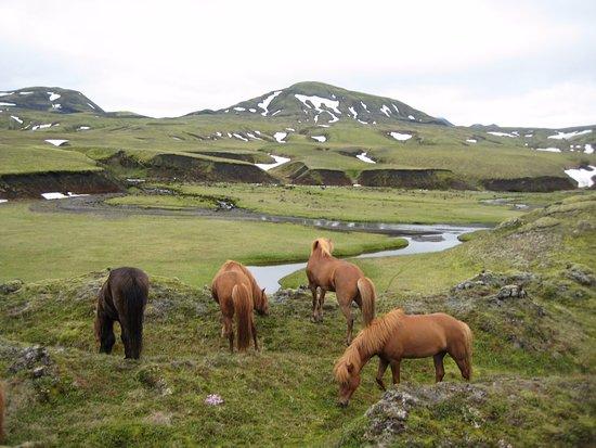 Hekluhestar: Horses