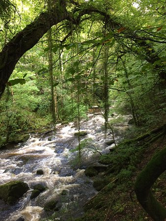 Llwyngwril, UK: The torrent walk Dolgellau