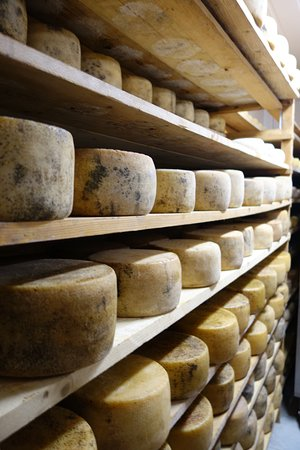 Peccioli, İtalya: Cheese Factory tour