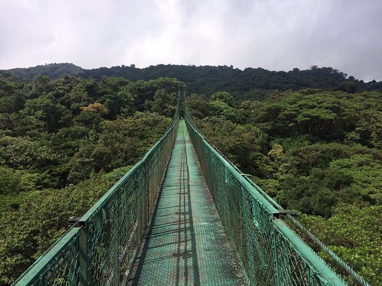 Puentes Colgantes - Picture of Selvatura Park, Monteverde - TripAdvisor
