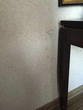 Mold on desk legs and wall behind desk Room 422 Picture of Holiday