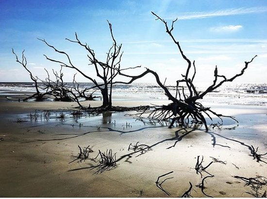 Coastal Expeditions Boneyard Beach On Bulls Island