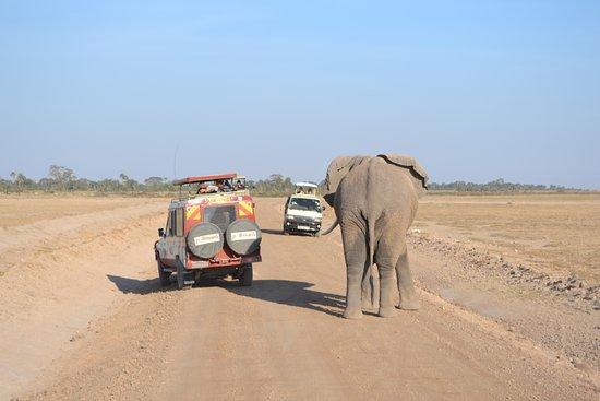 Amboseli National Park, Kenya: Amboseli traffic