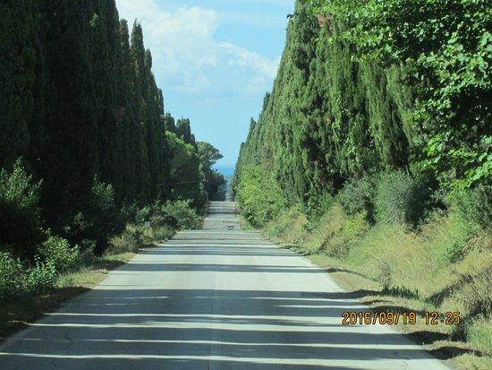 Castagneto Carducci, إيطاليا: ciprusok az útszélén...