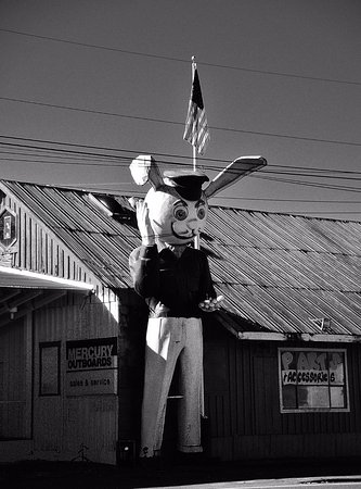 Aloha, OR : Harvey The Giant Rabbit in Black and White