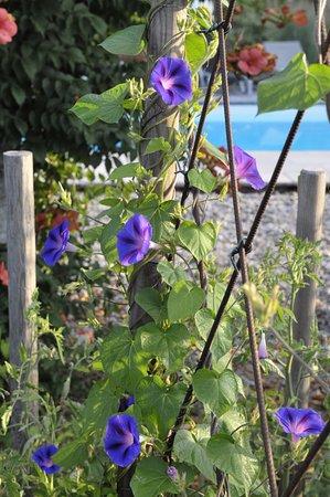 Fongrave, France: jardin