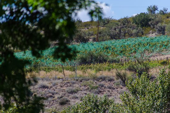 Cornville, AZ: View of part of the vineyards from outdoor deck
