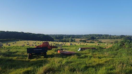 Henfield, UK : Wonderful weekend camping!