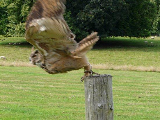 Helmsley, UK: owl experience