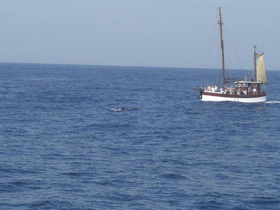 Los Gigantes, Hiszpania: el delfin que pudimos ver,