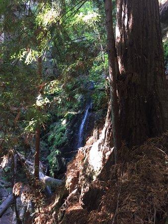 Boulder Creek, Kalifornien: Big Berry Falls loop
