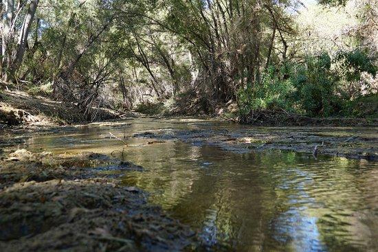 Wickenburg, AZ: Hassayampa River