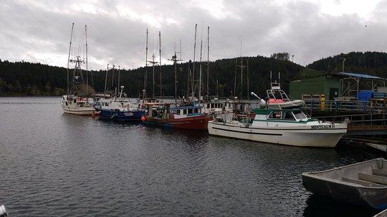 Port Hardy, แคนาดา: Coal Harbour Fishing Boats