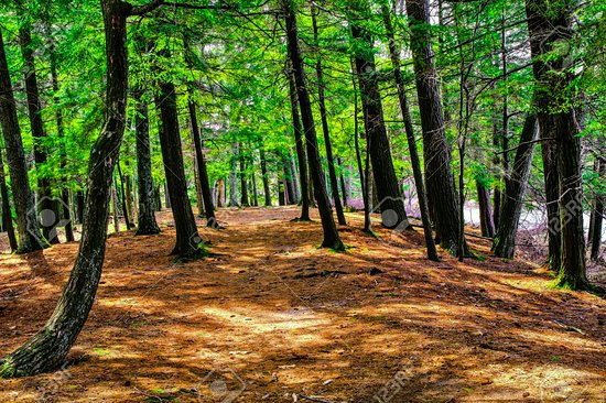 Ludington State Park: This is one of the paths that my family always walks on every year. Never gets old!