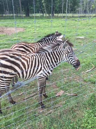 West Bend, WI: Zebra Friends