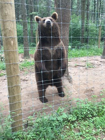West Bend, WI: A bear (can't feed this guy)