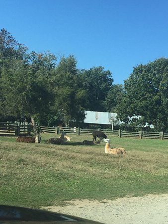 Mooresville, Северная Каролина: photo5.jpg