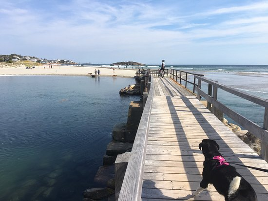 Good Harbor Beach: It's dog friendly on even numbered days in the off season!