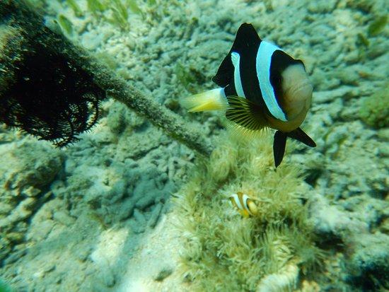 Desa Sekotong Barat, Indonesia: grumpy fish