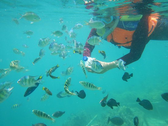 Desa Sekotong Barat, Indonesia: come here fish..i have food.... ^_^