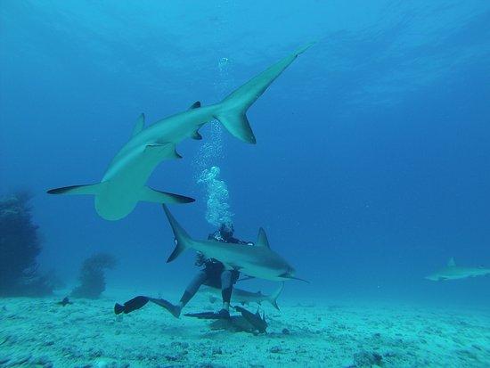 Simpson Bay, Saint-Martin / Sint Maarten: photo0.jpg
