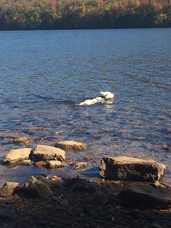 Mauch Chunk Lake Park: Luna swimming in Mauch Chunk Lake. Mid-October 2016.